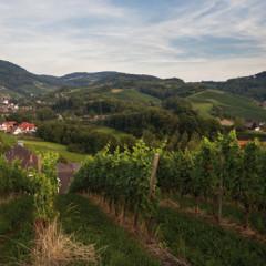 Alde Gott – Panoramarunde um Sasbachwalden