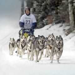 Schlittenhunde-Rennen in Todtmoos