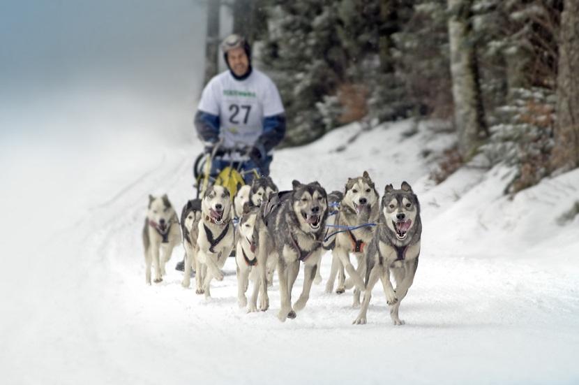 Schlittenhunderennen in Todtmoos  ©Tourist-Information Todtmoos