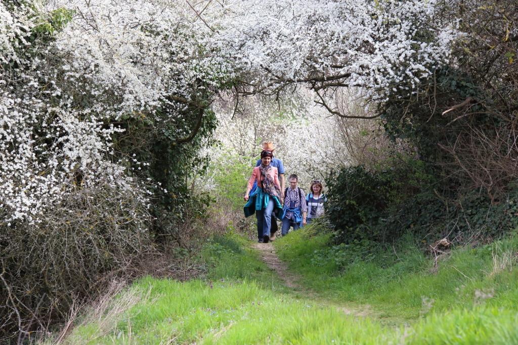Blütenwanderung am Kaiserstuhl Bild: Touristinfo Endingen