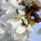 Kulinarische Blütenwanderung am Kaiserstuhl