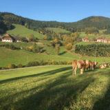 Herbstwanderung im Schwarzwald
