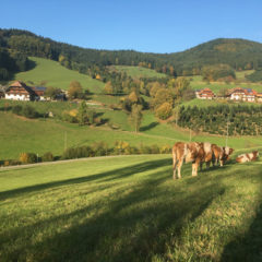Biospährengebiet im Südschwarzwald von UNESCO anerkannt