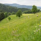 Wiesenmeisterschaft 2017 im Naturpark Südschwarzwald
