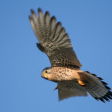 Exkursion zu den Vögeln des Frühsommers am Feldberg