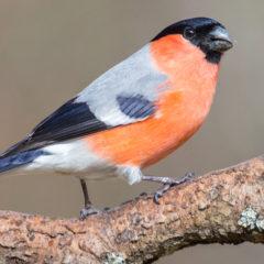 Exkursion zu den Vögeln des Herbstes am Feldberg