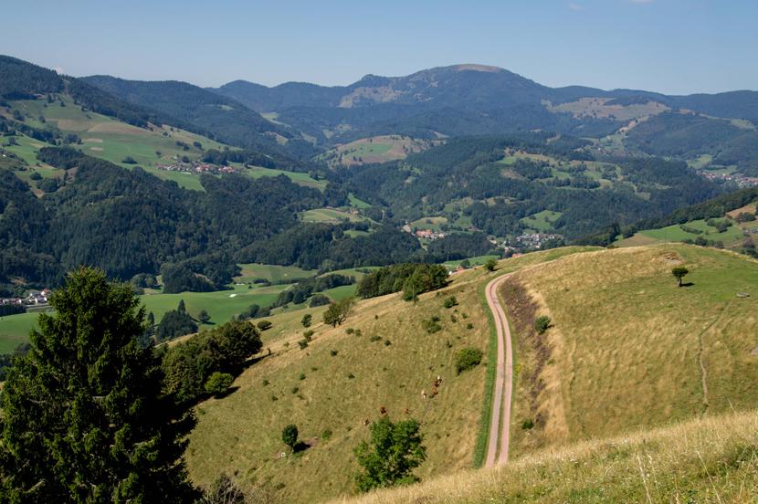 UNESCO Biosphärengebiet Schwarzwald