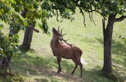 Wildtiergehege Bischenberg