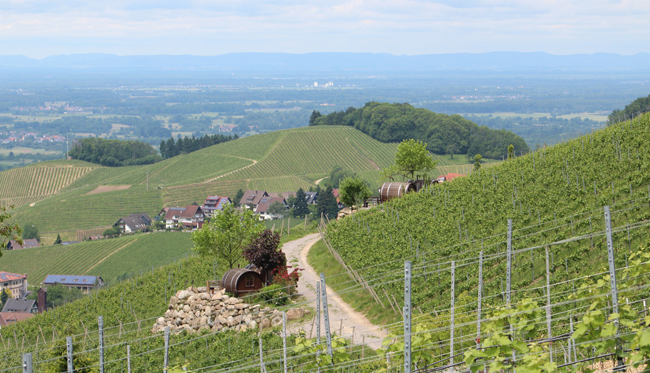 Schlafen in einem 8000 Liter großen Weinfass | Schwarzwald Regioguide